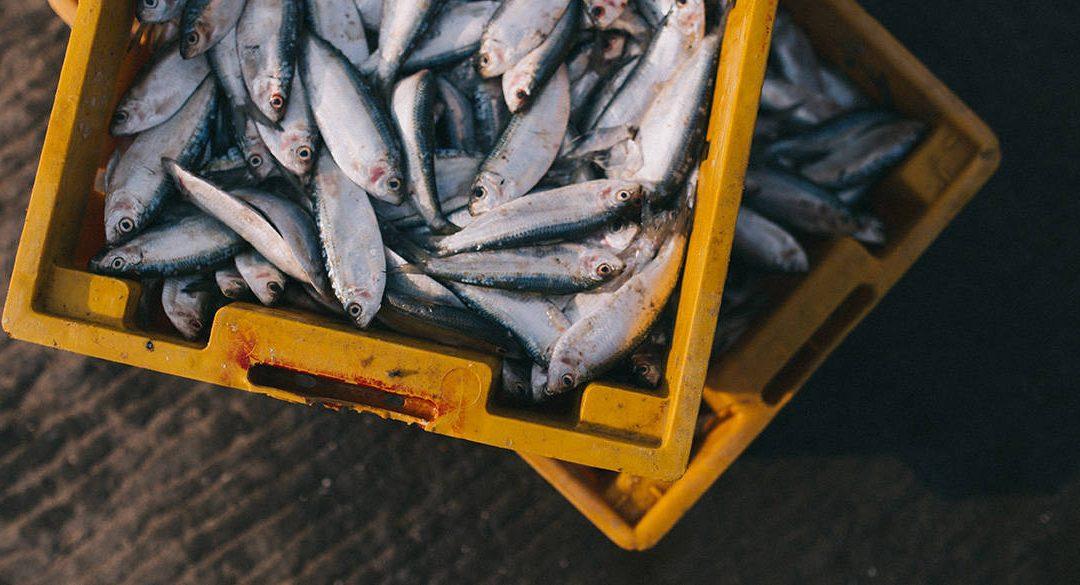 Beneficios del pescado azul: Cuida nuestro corazón